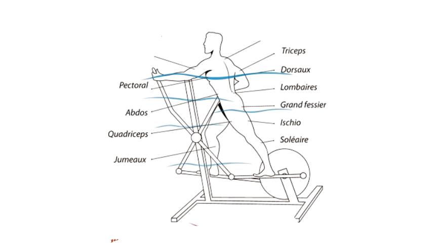 ellipticals work